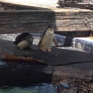 Big Boy Penguin